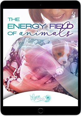 Energy Field of Animals