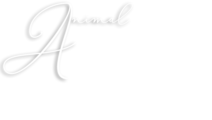 Animal Energy® Certification Training